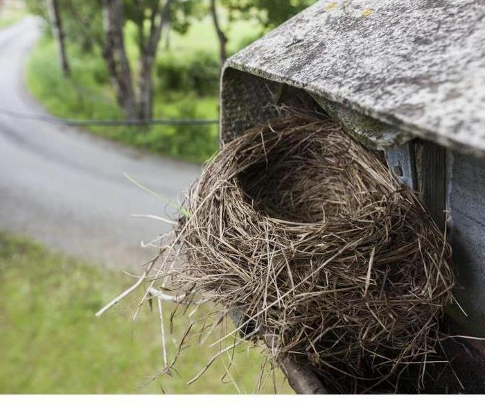 Commercial How To Discourage Birds From Nesting on Your Building