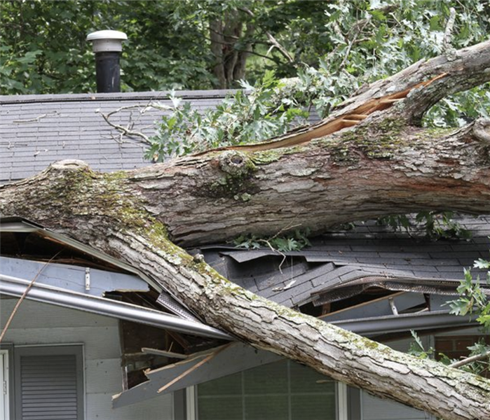 Fallen tree on a damaged roof.