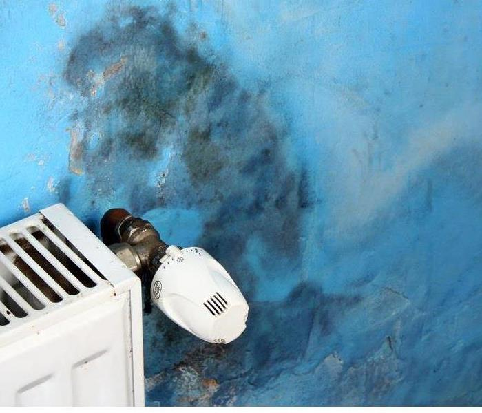 Commercial Understanding Mold Remediation