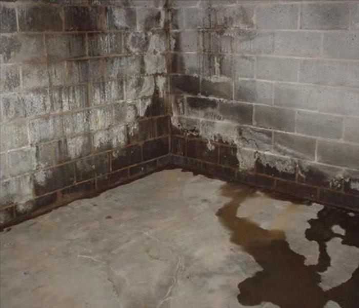 Water Damage 3 Reasons Your Basement is Leaking- Hixson, TN 37343