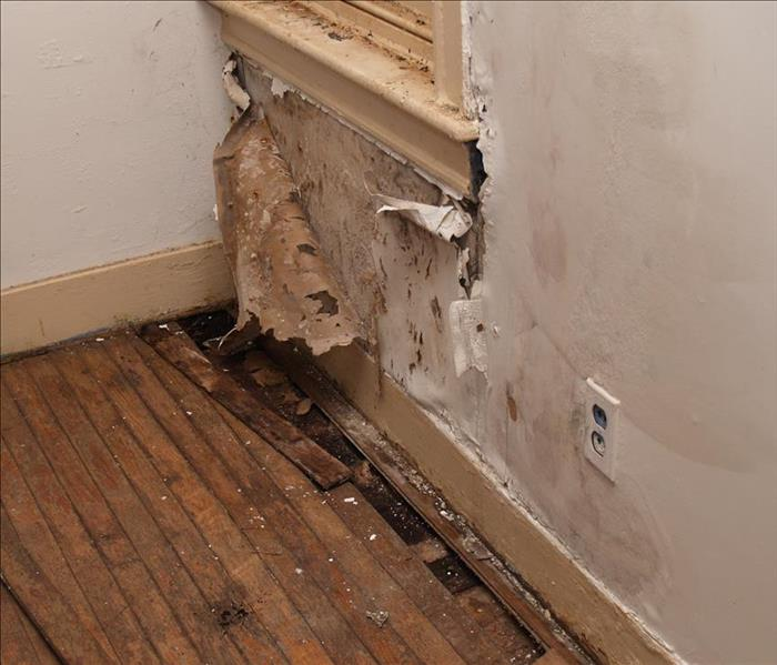 Water Damage East Ridge Water Damage - Get Expert Advice and Help
